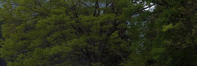通称「俺の樹」