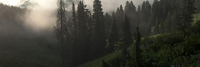 眠れる美女の森