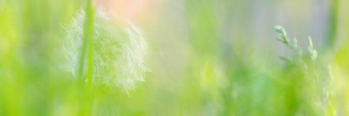 春の日の思い出